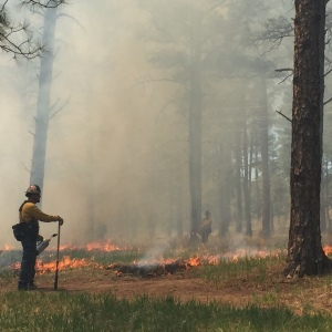 Prescribed Fire Operations along Cedar Creek Fitness Trail