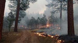 Crews burn along Road 49