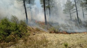 588 Fire burning in grass understory