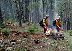 Firefighters igniting slash piles on the Cox Canyon Prescribed Fire Project
