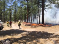 Area 74 Prescribed Fire on the Black Range Ranger District