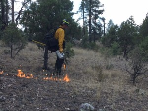 photo shows a firefighter igniting on the Area 74 Rx fire on the Black Range Ranger District
