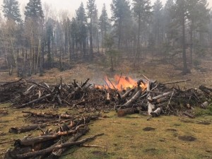 Pile burning on Sacramento Ranger District
