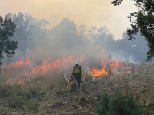 Prescribed Fire Operations on Sacramento Ranger District