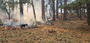 Small flames move across the forest floor.