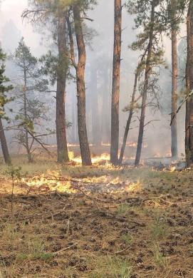 Dark Canyon Fire